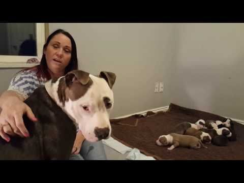 Update and answering questions - YouTube | Foster dog ...