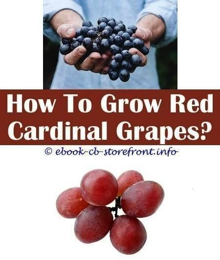 Diligent ideas How To Grow Grape Vines From Cuttings grape growing ideas fenc 4 Diligent ideas How To Grow Grape Vines From Cuttings grape growing ideas fenccuttings4 Dil...