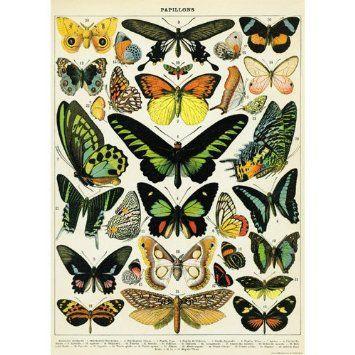 Amazon.com: (20x28) Natural History Butterflies Decorative Decoupage Vintage Style Paper Poster Print: Home & Kitchen