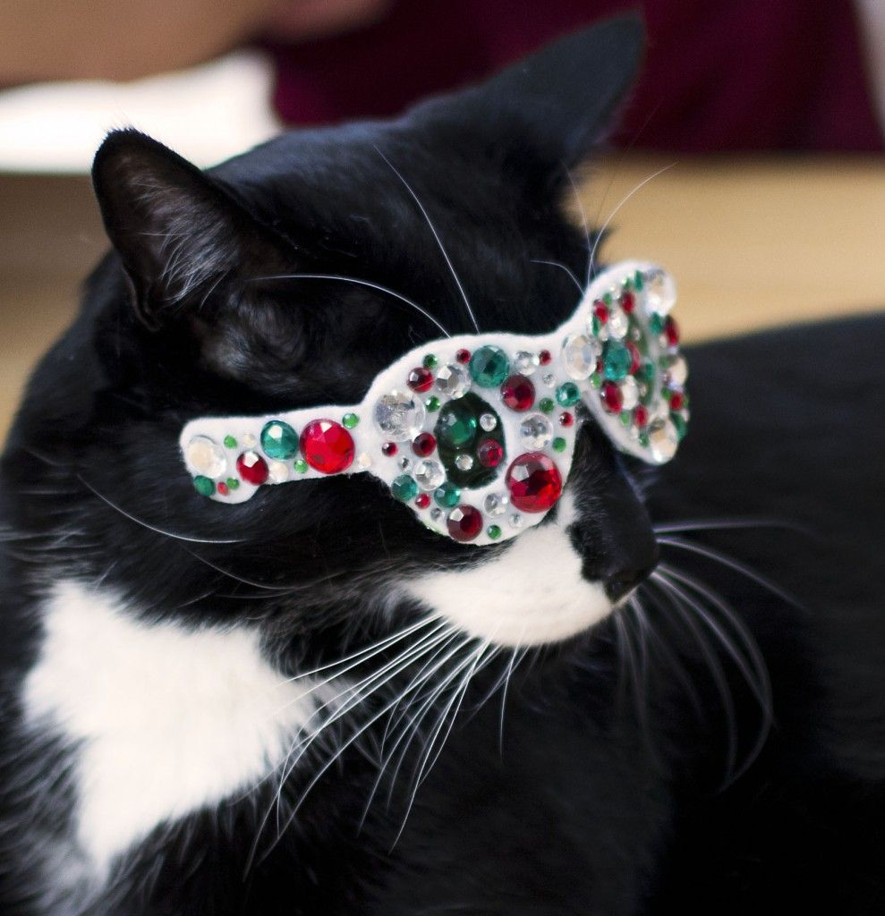 Pin by bonnie on cats with glasses Christmas cats, Fancy