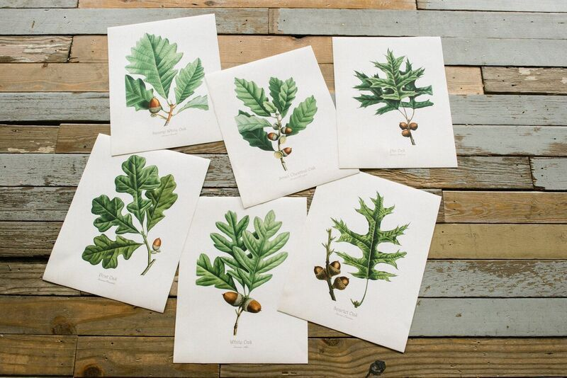 French Oak Series Prints – get Chad to check these out. For MBR?