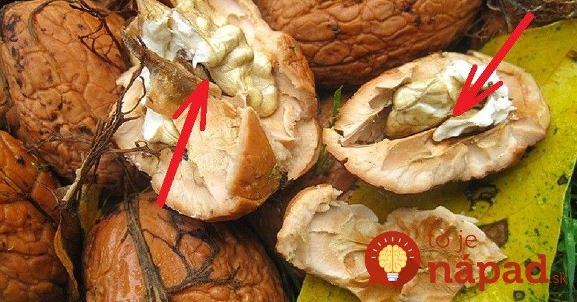 Vedeli ste, že aj tie časti vlašských orechov, ktoré nejeme, sa dajú skvel využiť? Napríklad, tvrdé vnútorné časti jadra alebo škrupinka.
