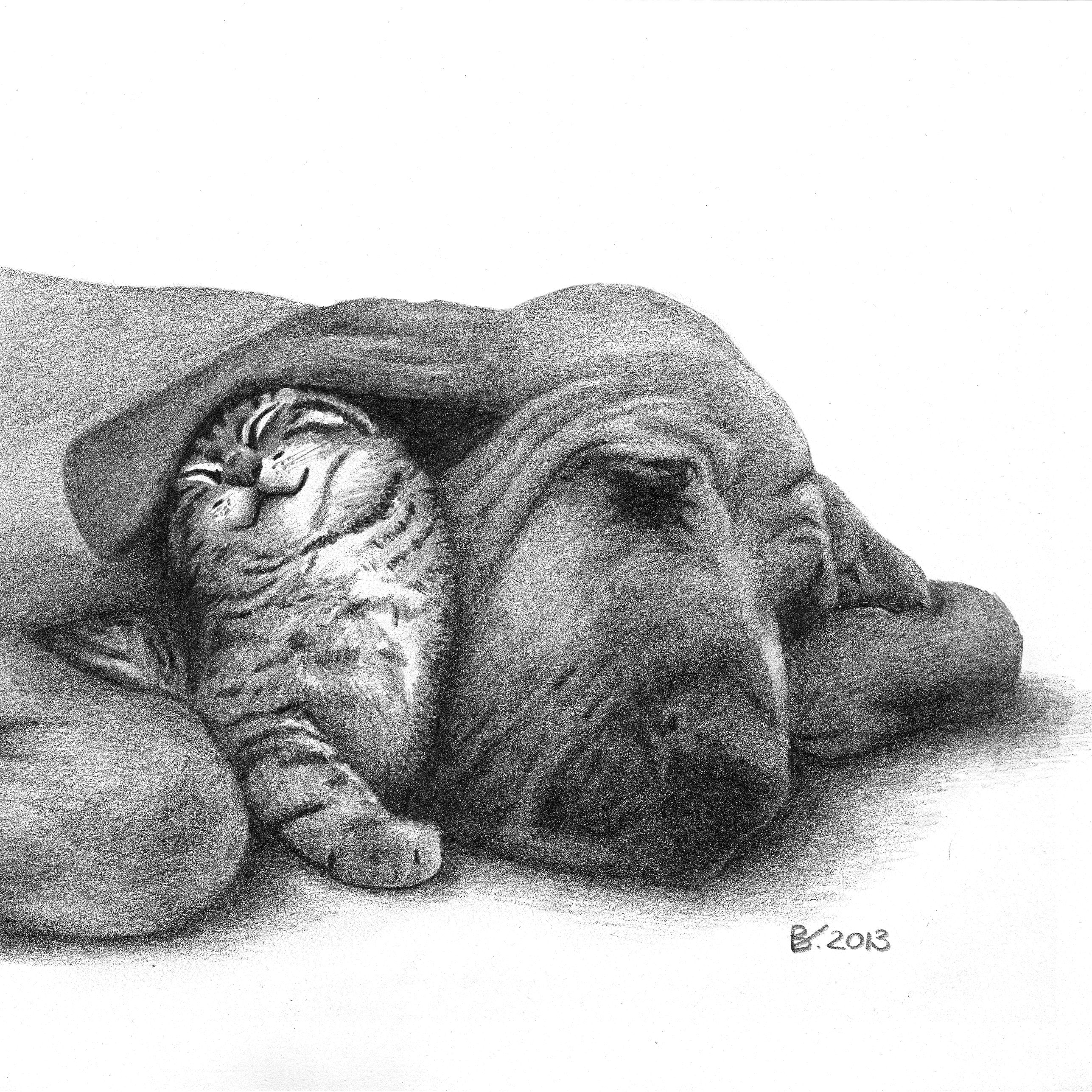 Drawing Of A Cute Kitten Cat And A Sleeping Dog Realism Animal Fine Arts Art By Barbara Vugs Dog Drawing Cute Animals Animals