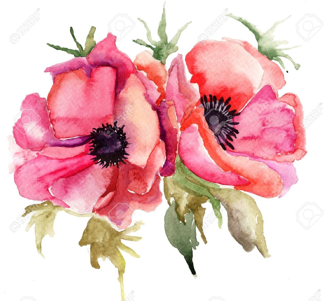 Stock Illustration Watercolor Poppies Poppies Tattoo
