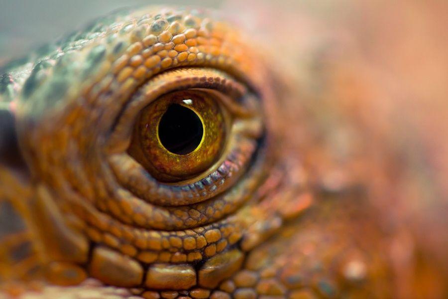 An Eye by Irene Mei on 500px