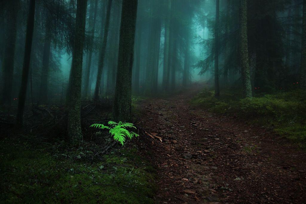 Fotograf Fairy Tail von Bastien HAJDUK auf 500px