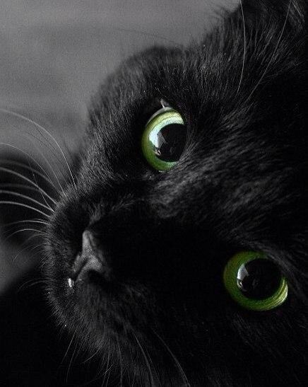Black Cat S And Dog S Are Beautiful With Images Cute Animals Black Cat Cats