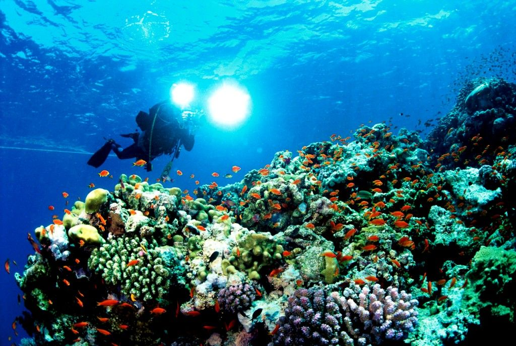 Caribbean Diving: Experience The Sea Diving At Mesmerising Islands