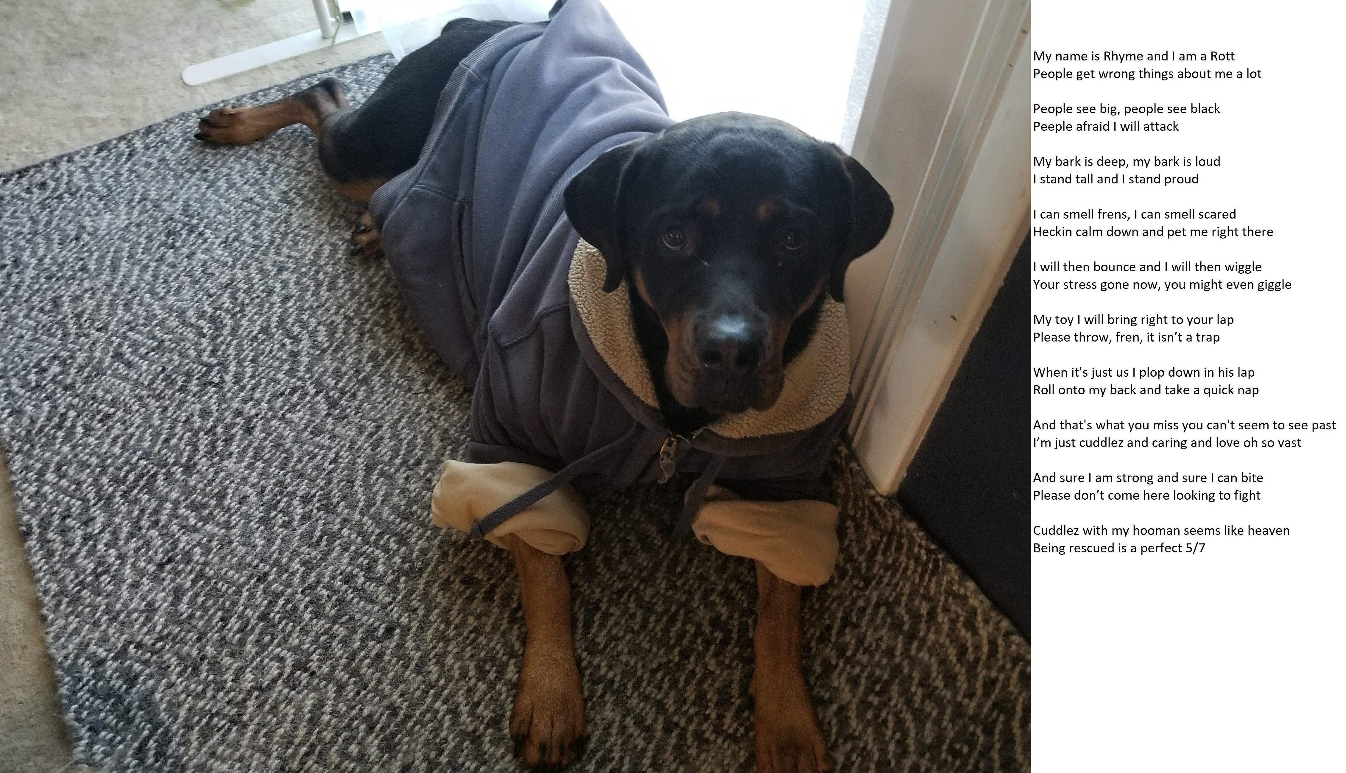 Ode to the rottie dogs pets dog adopt love cute animals