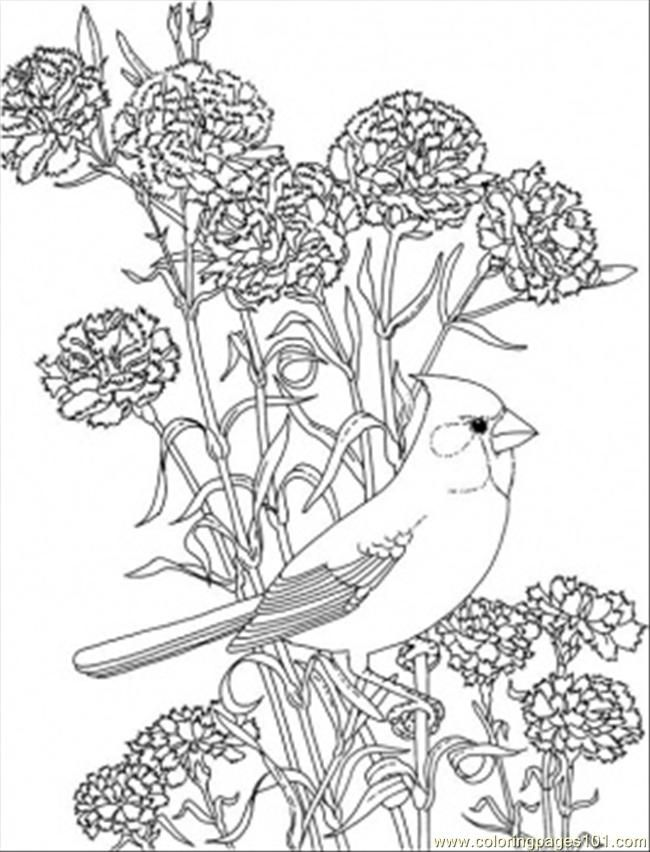 Red Cardinal Colouring Pages Bird Coloring Pages Flower