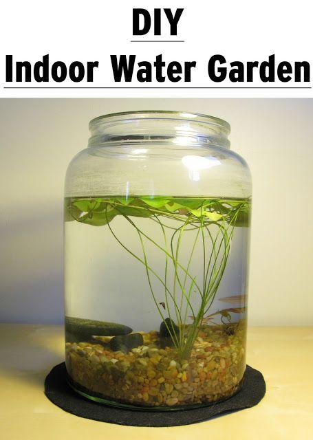 Diy Indoor Water Garden: Learn How To Create Beautiful Indoor Planted Water Gardens