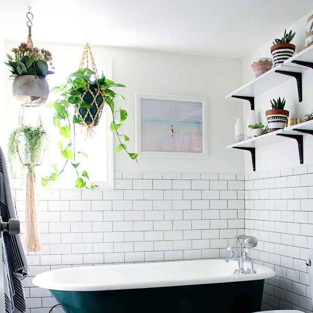 Here\'s the Latest Low-Maintenance Plant Trend Taking Over Pinterest ...