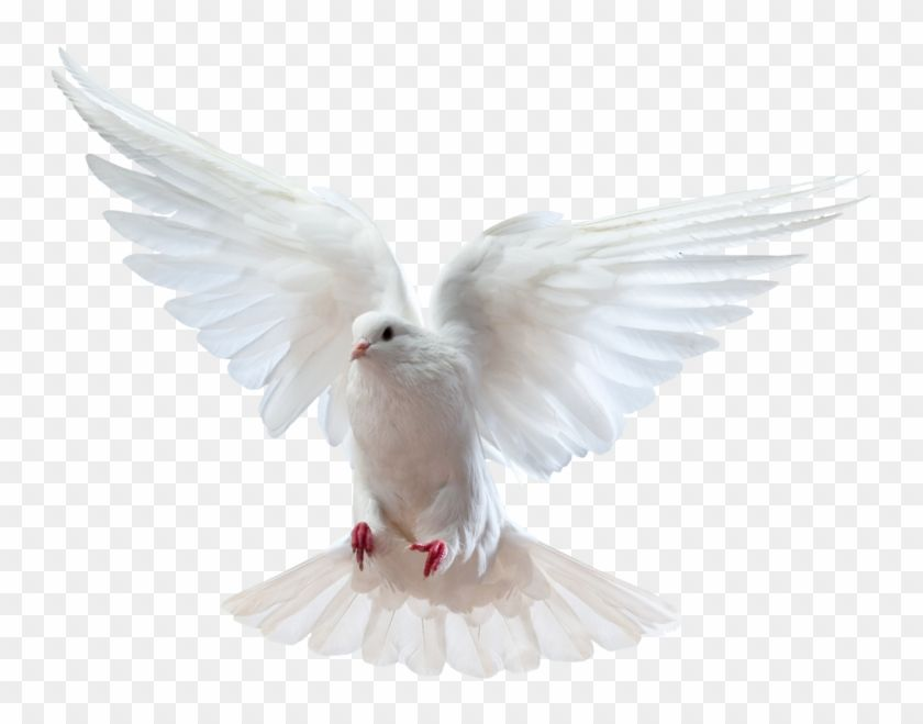 Find Hd Holy Spirit Dove Png Dove And Bible Png Transparent Png To Search And Download More Free Transparent Png Holy Spirit Dove Holy Spirit Images Bible