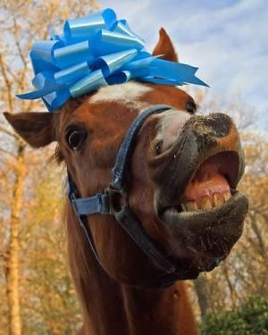 Pet Sayings: Don't look a gift horse in the mouth | Horse and Gift