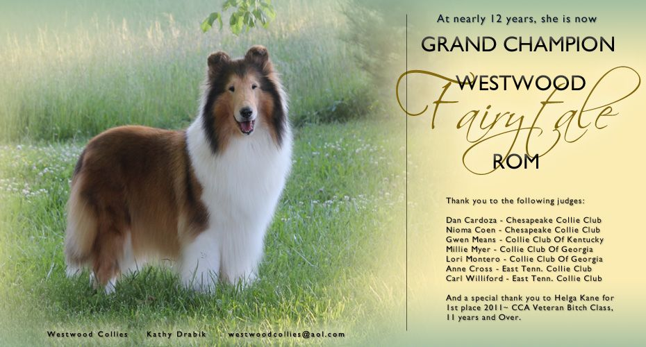 Grand Ch Westwood Fairytale Rom Collie