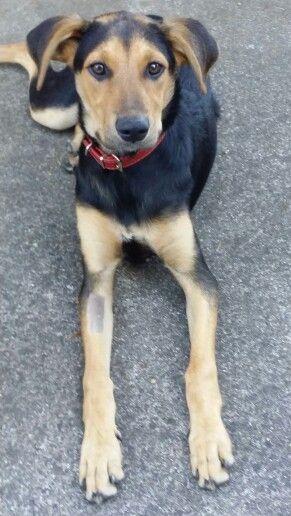Nz Hunterway Puppy Dogs Puppies Cute Animals
