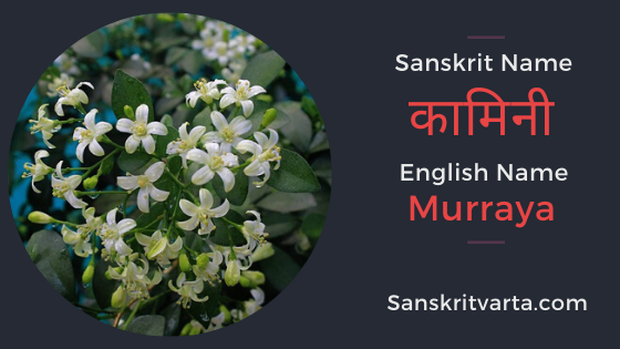List Of Flowers Name In Sanskrit Hindi And English With Pictures In 2020 Name Of Vegetables Dry Fruits Names Sanskrit