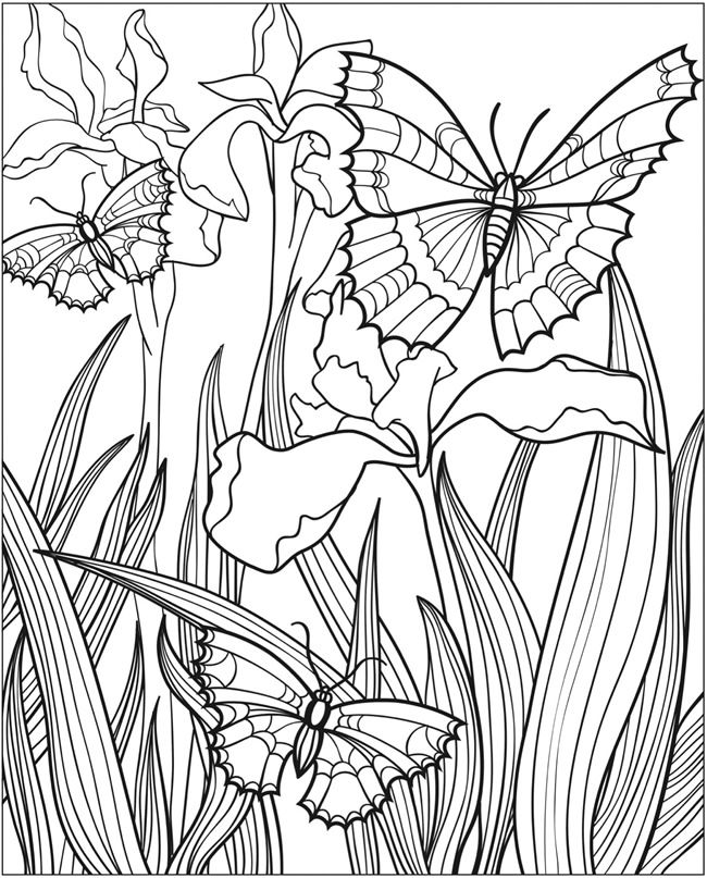 Butterfly Papillon Mariposas Vlinders Wings Gracefull Amazing Coloring pages colouring adult detailed advanced printable Kleuren voor volwassenen coloriage pour adulte anti-stress kleurplaat voor volwassenen Line Art Black and White http://www.doverpublications.com/zb/samples/802175/sample8d.html
