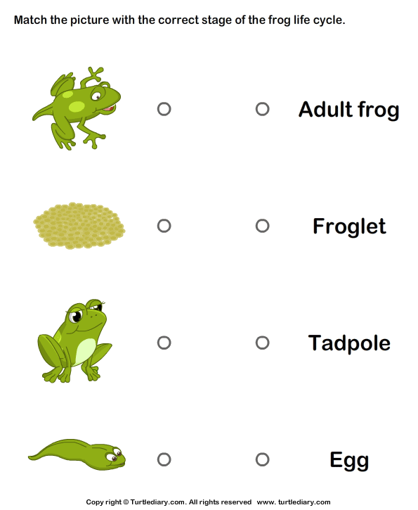 Frog Worksheets For Kindergarten Frog Life Cycle Worksheets For