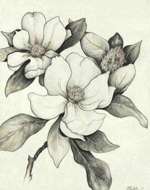 Magnolia Pencil Drawings Of Flowers Flower Sketches Flower Tattoo