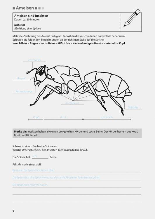 hnliches foto ameisen insekten pinterest insekten. Black Bedroom Furniture Sets. Home Design Ideas