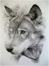 drawings of animals - Google Search