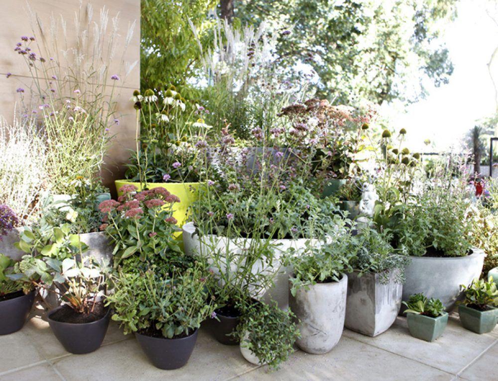 Passion For Perennials Ian Barker Gardens Garden