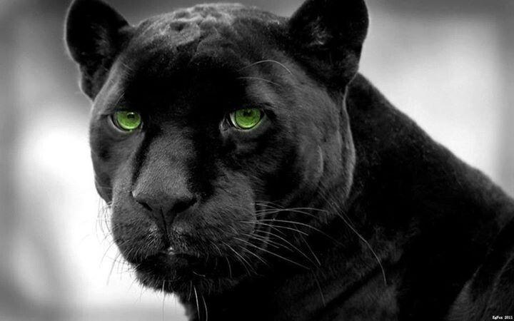 Belleza Negra!!!
