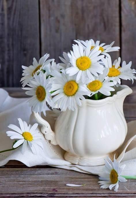 Pin by Zade on Kır çiçekleri | Pinterest | Flowers, Flowers garden ...