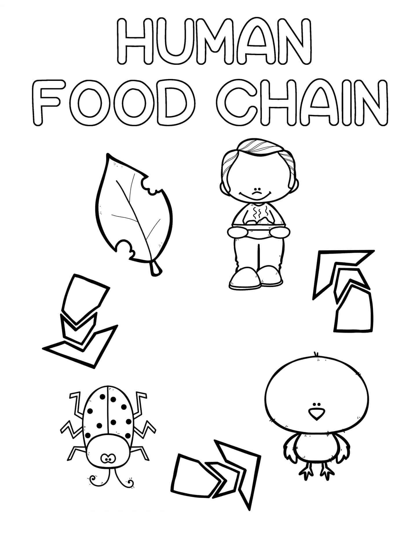 Preschool Coloring Pages Human Food Chain