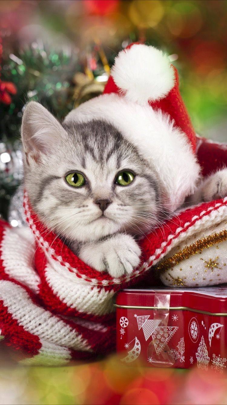 Pin By Peter Green On Christmas New Years Christmas Kitten Merry Christmas Cat Christmas Cats