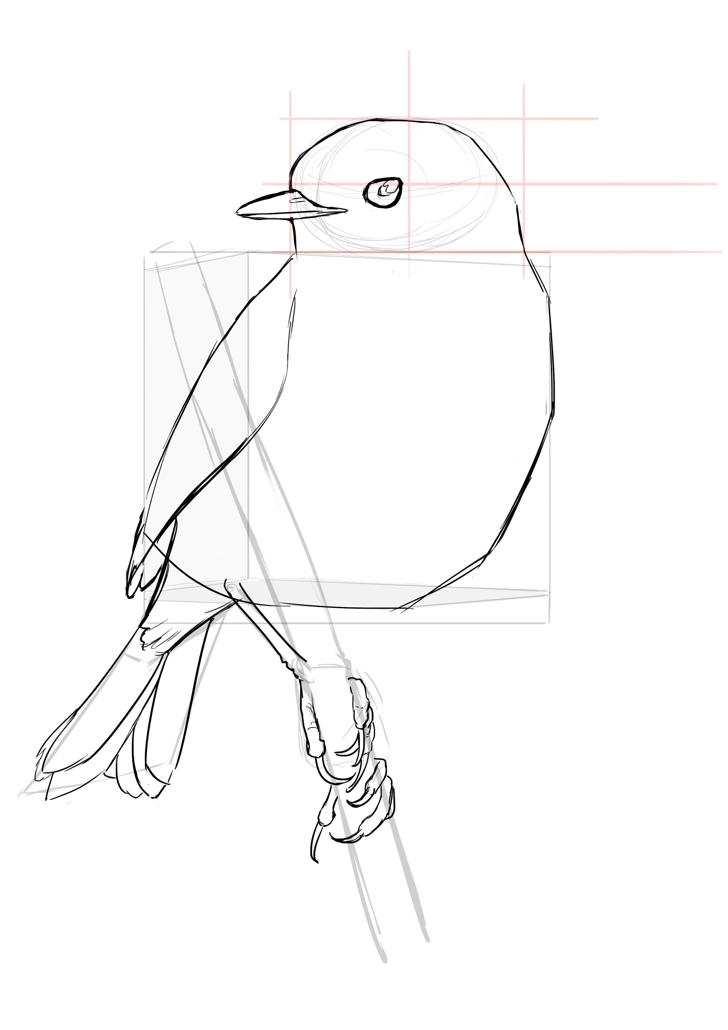 Comment Dessiner Un Oiseau Dessin Oiseau Comment Dessiner Un