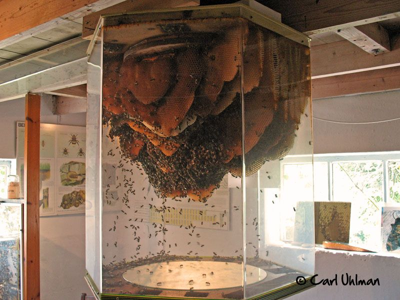 An immense observation hive Bee keeping, Bee house, Bee