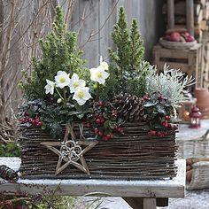 Winter Weihnachten Rosen - Wintergarten Ideen #winterdekodraussen