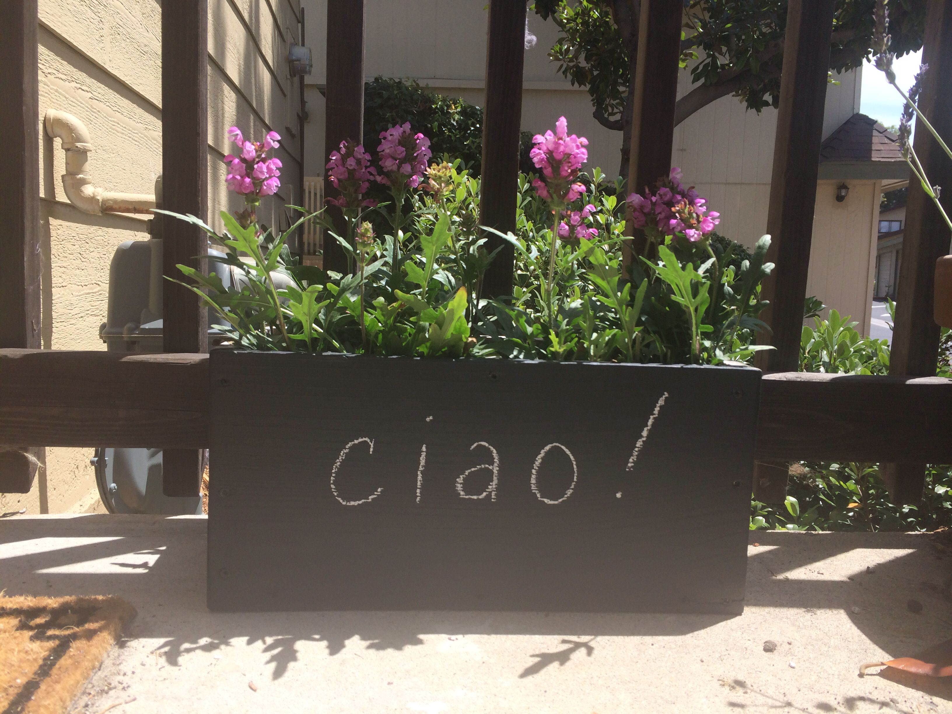 My Awesome Diy Chalkboard Painted Wooden Planter With All Heal Flowers From A Local