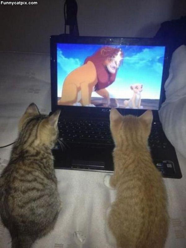 Kitties Watching Lion King