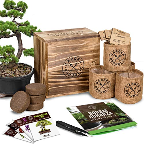 Bonsai Tree Seed Starter Kit - Mini Bonsai Plant Growing Kit Recommended BackyardEquip.com Preparing for patio, lawn and garden#backyardequipcom #bonsai #garden #growing #kit #lawn #mini #patio #plant #preparing #recommended #seed #starter #tree