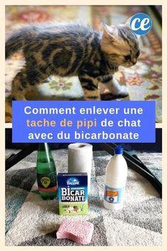 Comment faire dispara tre une tache de pipi de chat avec - Nettoyer canape tissu bicarbonate de soude ...