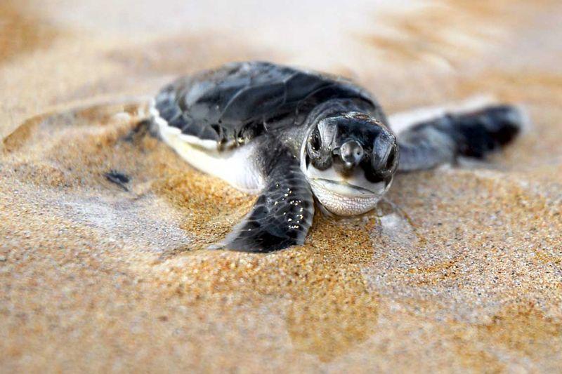 baby animals | Atividades – Pousada da Espera – Itacimirim – Bahia – Brasil