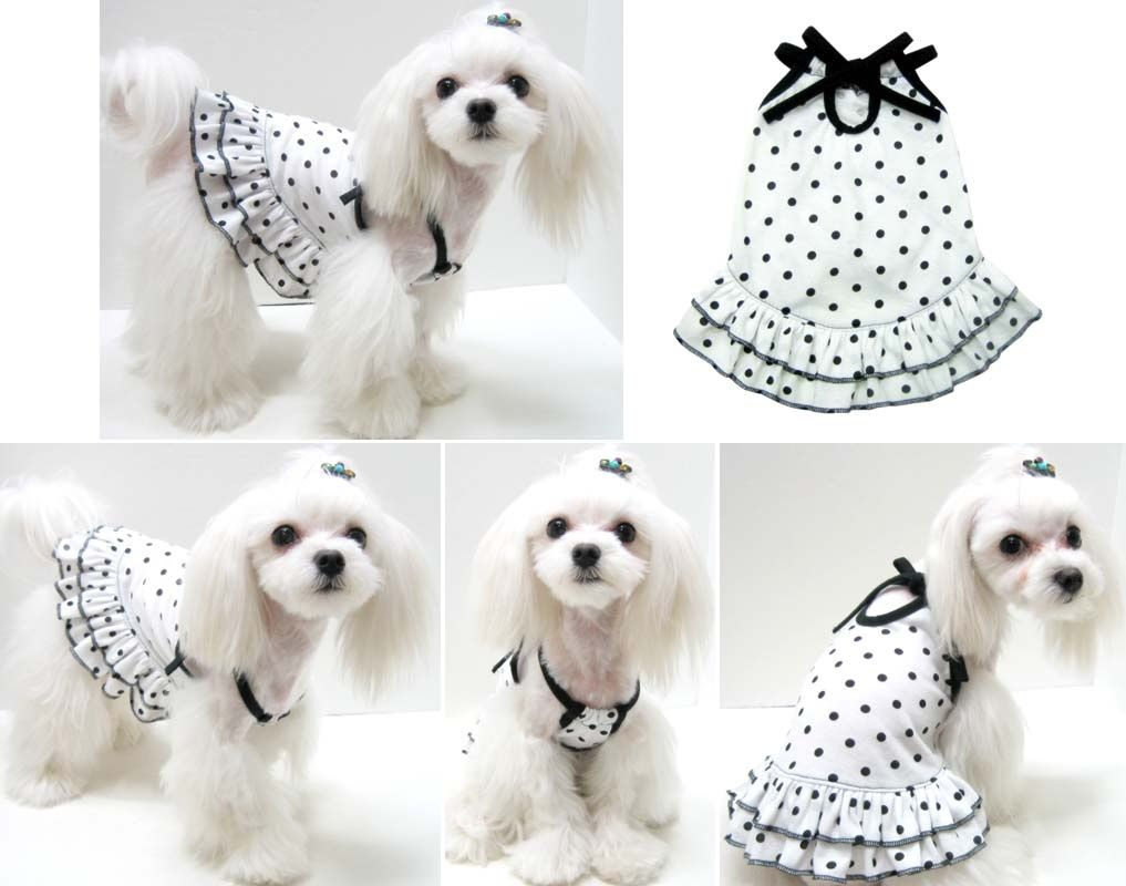 ea5cf09ab Black and white spots! Cães Vestidos, Amo Meu Cachorro, Roupa Para Cachorro,