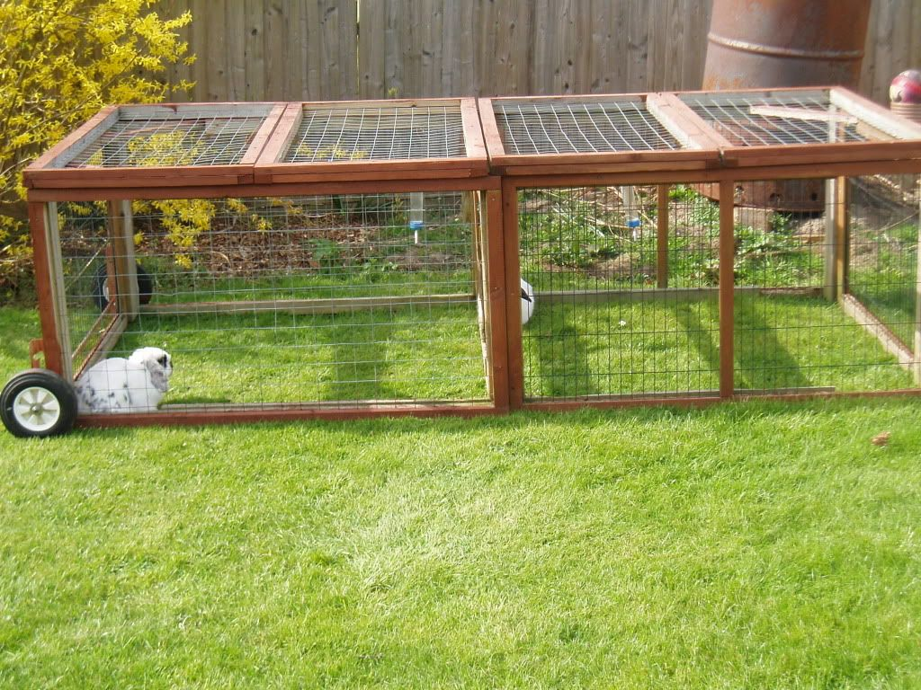 ideas for an outdoor rabbit run rabbits online projects to try