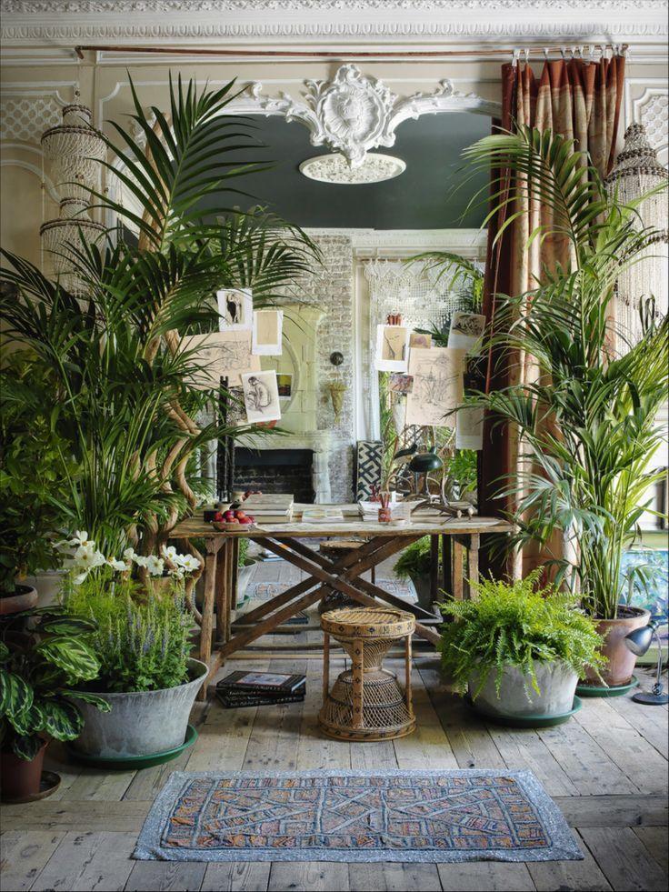 Photo of Schöne Zimmerpflanzen Bilder – so können Sie Ihre Wohnung dekorieren