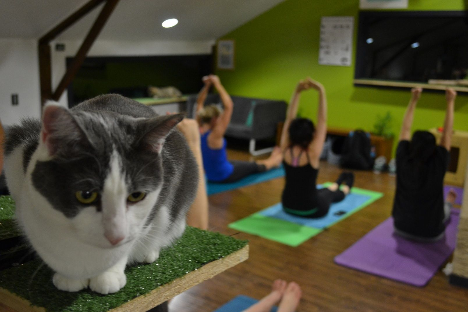 Yoga = best enjoyed with cats @kimdelahaye & @dralexhynes were lucky enough to partake in this spectacle at Lucky Cat Cafe's cat yoga session.