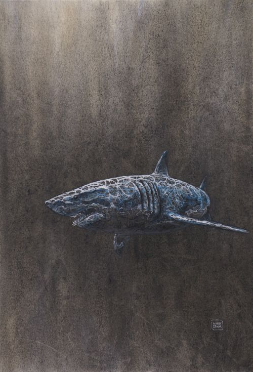 Great White Shark - Artist Winkstink #drawing #charcoal #pencil #watercolor #ColoredPencil #art #floating