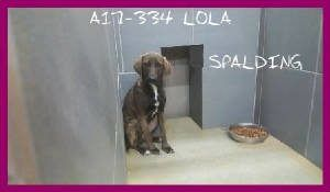 Last Chance Pets Spalding County Animal Shelter Pets Dog Safe