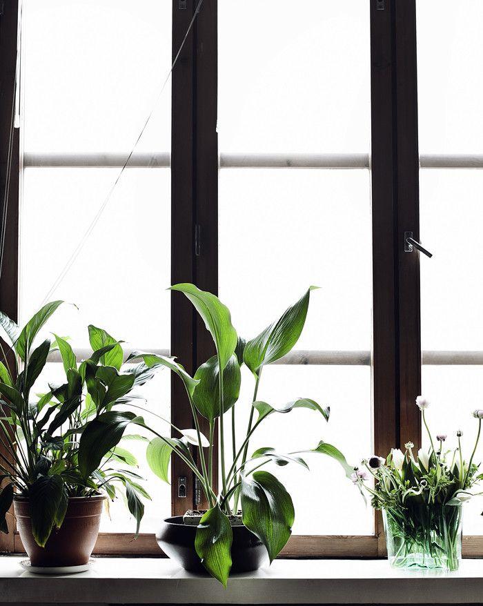 Greens. Suvi sur le vif | Lily.fi