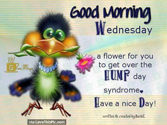 Good Morning Wednesday Heres a Flower For You To Get Over Hump Day | Good  morning wednesday, Wednesday morning quotes, Wednesday humor
