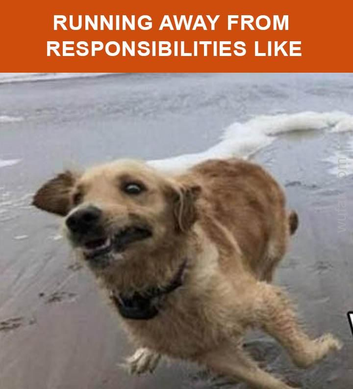 090c7058dc986706d83b835375720aad scared dog running away from responsibilities funny memes,Dog Running Meme