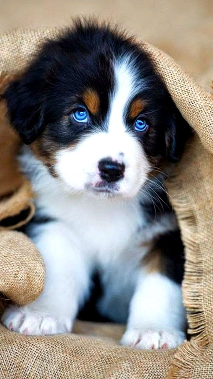 #cutepuppies