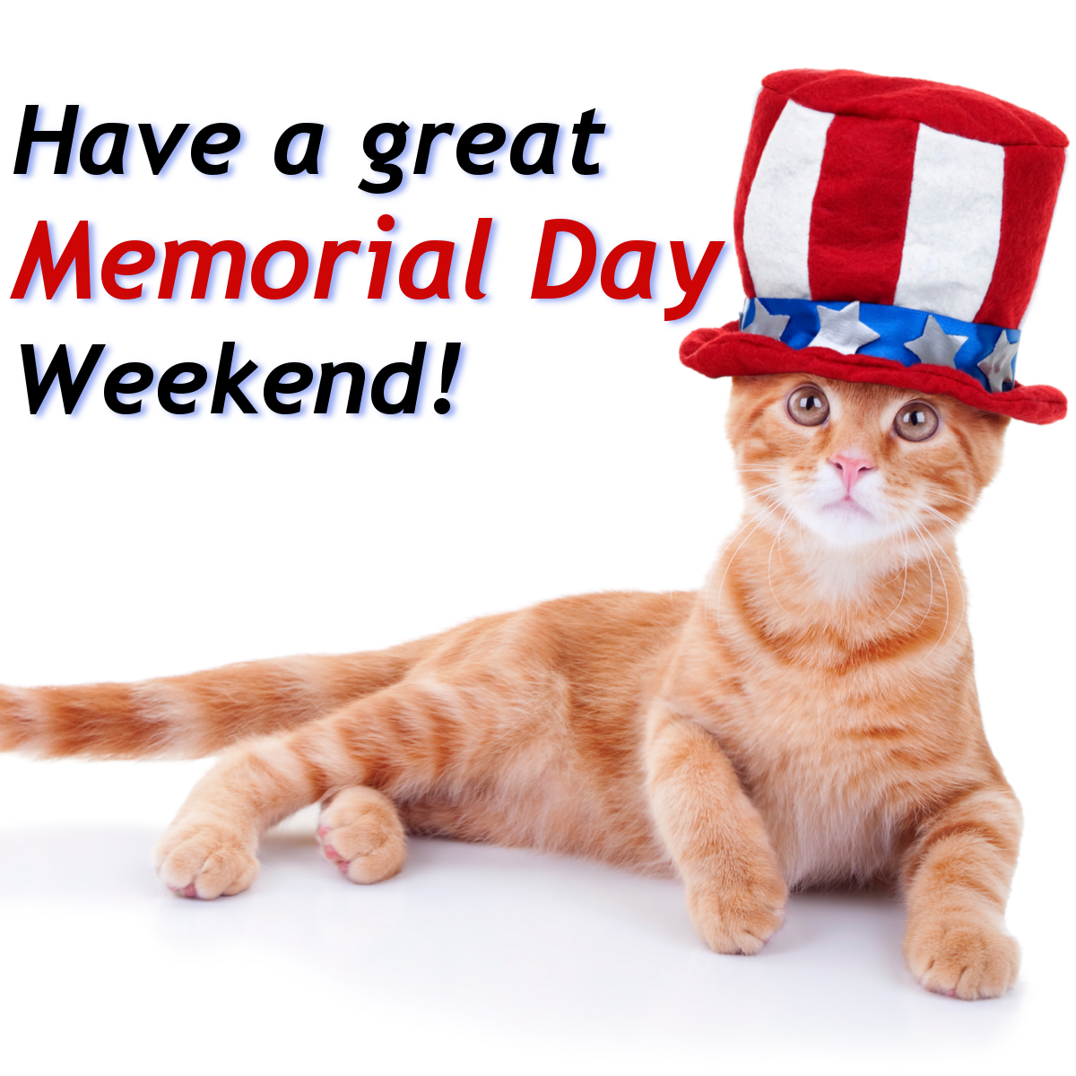 Inboxdollars The Free Online Rewards Club That Pays Cash Patriotic Cat Kitten Images Happy Presidents Day